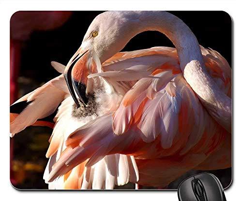 Mousepad Flamingo Bird Bunte Tierpark Hellabrunn München Mauspads Gedruckte Laptop-Spielmatte 25X30Cm Schreibtisch Diy Gummitisch Personalisierte Retro-Tastatur Rutschfeste Office