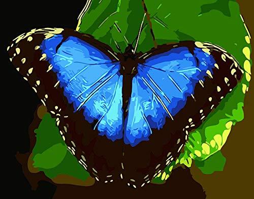 GenericBrands Pintura al óleo de Bricolaje por Kits de números Pintura al óleo de Lienzo de Mariposa Azul para Adultos y Principiantes de Dibujo con Pinceles 40 * 50 cm sin Marco