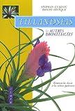 Tillandsias et autres bromeliacées - Comment les choisir et les cultiver facilement