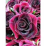 Bricolaje pintura diamante 5D por Número Kit completo Flor rosa,Diamond Painting Grande Square Bordado Punto de Cruz Cristal diamante Artes para decoración de la pared hogar Regalo(25x30cm,10x12in)