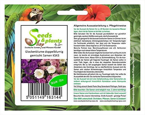 Stk - 35x Glockenblume doppelblumig gemischt - Samen Pflanze Blumen Garten KS43 - Seeds Plants Shop Samenbank Pfullingen Patrik Ipsa