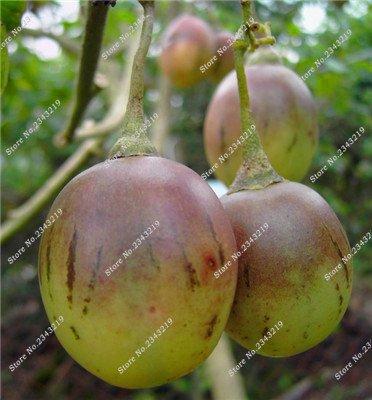 Saint Fruit Tomate Graine tomates cerises bricolage jardin domestique, Bonsai Fruit Légumes Anti-âge Terrasse Cour 200 Pcs 4