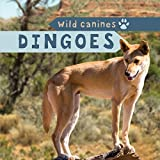 Dingoes (Wild Canines)