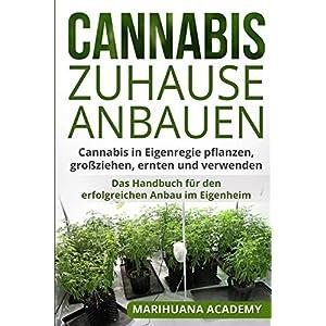 Cannabis zuhause anbauen: Cannabis in Eigenregie pflanzen