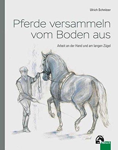 Pferde versammeln vom Boden aus: Arbeit an der Hand und am langen Zügel