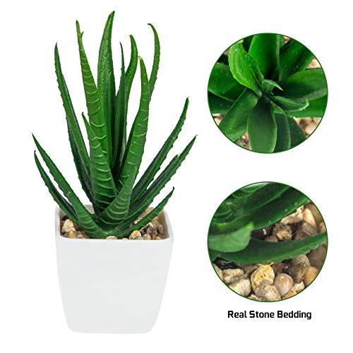 Ouddy Plantas