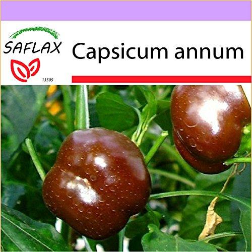 SAFLAX - Paprika - Sweet Chocolate X - 10 graines - Capsicum annum