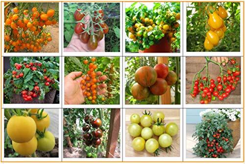 Tomaten Set 3: Balkontomate Cherrytomate Cockteiltomate 12 Sorten Tomatensamen Saatgut