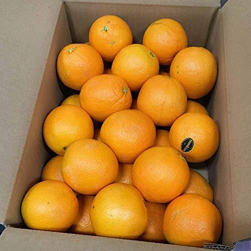 完熟 オレンジ 約5kg(24〜33玉) ネーブル バレンシア 果物 フルーツ 「北海道・沖縄は 1100円」