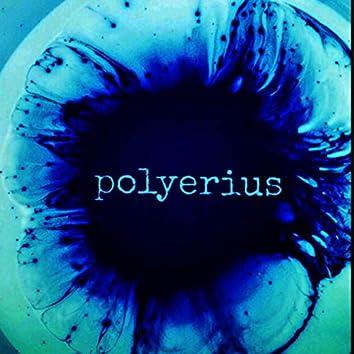 Polyerius