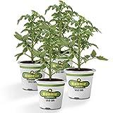 Bonnie Plants Big Boy Tomato Live Vegetable Plants - 4 Pack, 6 - 10'. Plants, 16 - 32 oz. Tomato Size