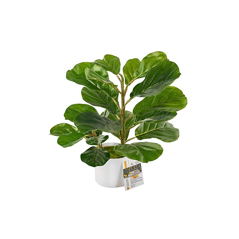 silk flower arrangements fiddle leaf fig tree artificial, 18 inch ficus lyrata, faux fig plant for indoor décor, small fake tree in white pot looking real, faux fiddle leaf fig tree