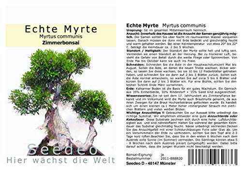Seedeo® Echte Myrte Bonsai 30 Samen
