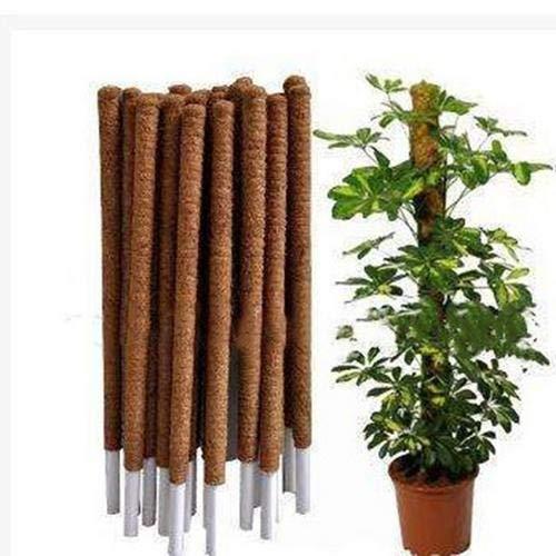 Pflanzenkletterstange, Moosstange zur Unterstützung von Zimmerpflanzen, Kokosnusskletterpflanzen Stützstangen, Kokospalmenstangen zur Kletterpflanze Weinreben