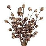 DWANCE 6pcs Ramo de Flores Secas Natural Flores de Cono de Pino seco inmortalizado para decoración jarrones navideños, arreglos Florales de Bricolaje para Bodas en la Oficina en casa