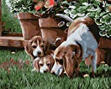 Pintura al óleo por números kit DIY acrílicas Pintura para Adultos y niños Pintura de Lona con Pinturas acrílicas Decoracione regalo-Tres perros en la hierba 40 x 50 cm sin marco