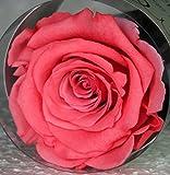 Rose éternelle stabilisée Rose foncé