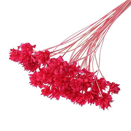 Kaxceay 2 Sac Séché Fleurs Mini Petite Fleurs Bouquet Vivid Plantes Naturelles Préservez Floral pour la décoration de la Maison de Mariage (Color : Rose Red)
