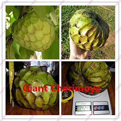 HONIC 10 Pezzi Crema di Mele Frutta del Buddha Testa frutto raro Cherimoya Giant Sugar Apple