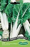 Germisem Verte A Cardes Blanches 3 Semillas de Acelgas 5 g