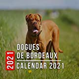 Dogues de Bordeaux Calendar 2021: 12-month mini Calendar from Jan 2021 to Dec 2021, Cute Gift Idea For Dogues de Bordeaux Lovers Or Owners Men And Women | Pictures in Every Month