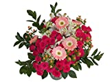 Edelweiss GJ Flowers Super Star Hot Pink Spray Rose Bouquet 33 Stems, 24 Inches Long, with Vase (Fresh Cut Flowers)