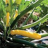 Astonish I Semi Confezione: 10 - Semi: en Glory Ibrido F1 Zucchini Squash Seeds - Ottima Resistenza alle malattie !!