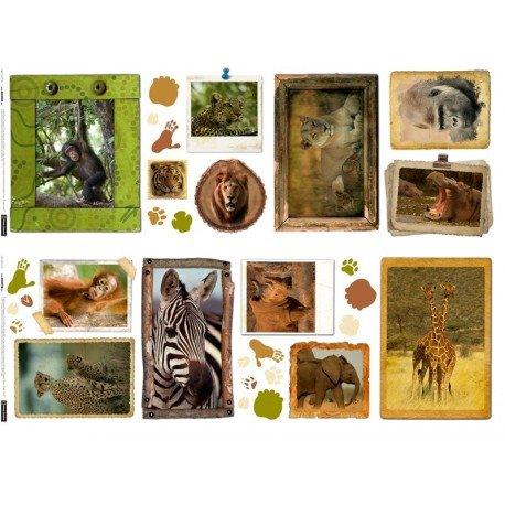 31 stickers National Geographic
