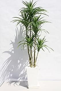 インテリアグリーン人工観葉植物・新ユッカ6本立て受け皿付き、光触媒品
