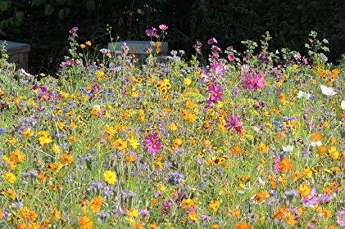 Blumenmischung Blumen für Bienen und Co. Z934 (50 g)
