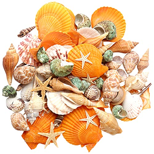 Maicodes Sea Shells - Mixed Beach Seashells Starfish - Various Size up to 3.5' Natural Sea Shells for Crafting Fish Tank Vase Fillers Beach Theme Party Wedding Home Decorations DIY (Color Series)