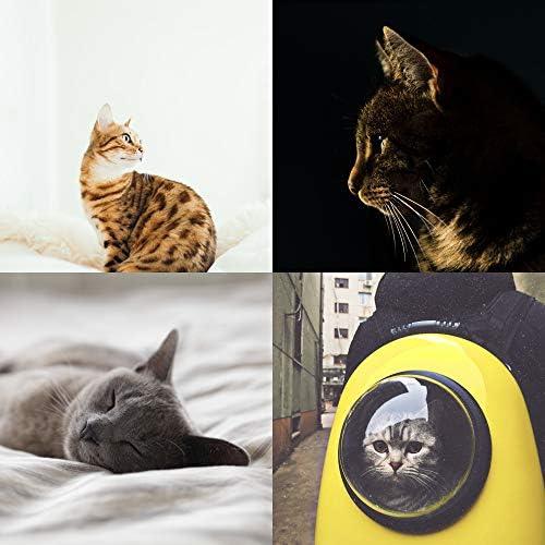 眩しい 猫のための音楽