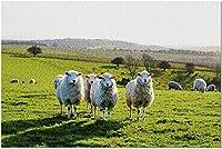 HD 4羊の芝生フィールド9035850(52*38CMプレミアム500ピースジグソーパズルアメリカ製!)