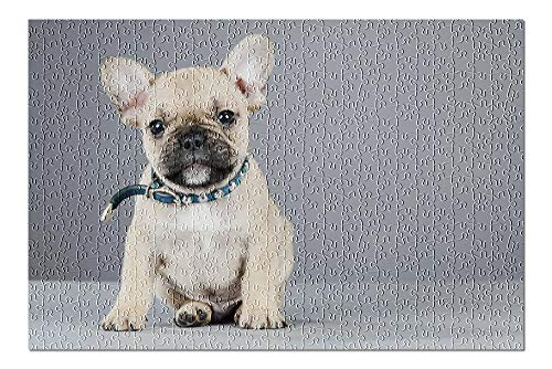 Lantern Press French Bulldog Puppy Wearing Rhinestone Collar 9022630 (500 Piece Premium Jigsaw Puzzle for Adults and Family, 13x19)
