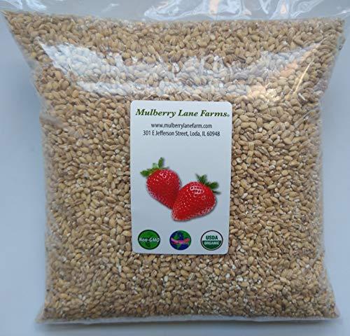 Pearled Barley 5 Pounds Pearl, USDA…