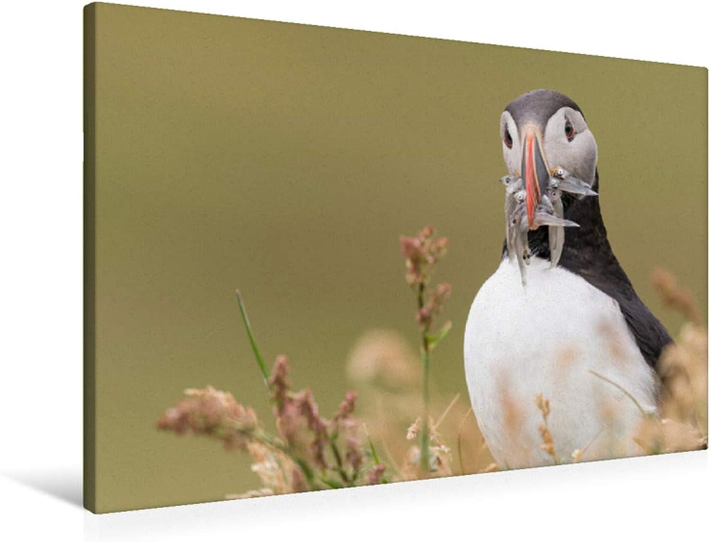 Premium Textile Canvas 90 x 60 cm Landscape Parred Diver with Beak Full of Fish
