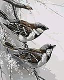 YUHHGFK DIY Pintura por Números Pájaro Animal Pint por Número de Kits con Pinceles y Pinturas para Adultos, niños y Principiantes Decoraciones Hogar - 40 X 50 cm (Sin Marco)