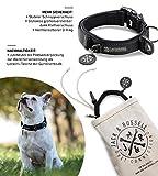 Jack & Russell Premium Hundehalsband Milu - Klettband - reflektierend - Neopren gepolstert - Hunde Halsband div. Größen und Farben - Milu (M (35-43 cm), Schwarz)