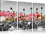 papaveri prato di fiori bianco / nero 3 pezzi di immagine tela 120x80 immagine sulla tela, XXL enormi immagini completamente Pagina con la barella, stampa artistica su murale con telaio, più economico di pittura o un dipinto a olio, non un manifesto o un banner,