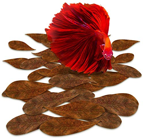 SunGrow Indian Almond Leaves