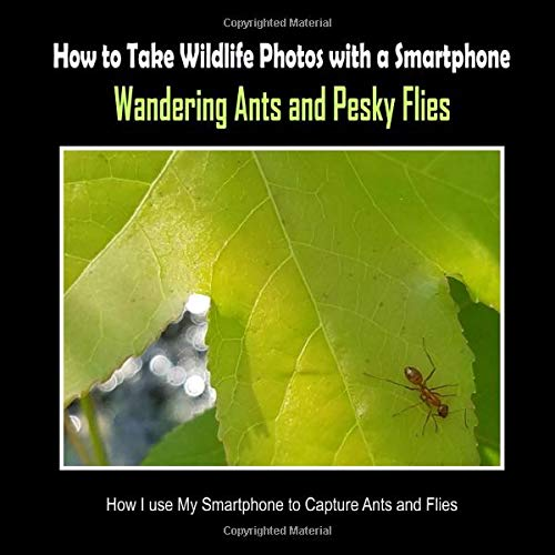 Wandering Ants and Pesky Flies: How I Use My Smartphone to Capture Ants and Flies (How to Take Wildlife Photos with a Smartphone, Band 10)
