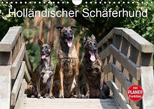 Holländischer Schäferhund (Wandkalender 2019 DIN A4 quer): Wunderschöne Fotos der beeindruckenden Holländischen Schäferhunde (Geburtstagskalender, 14 Seiten ) (CALVENDO Tiere)
