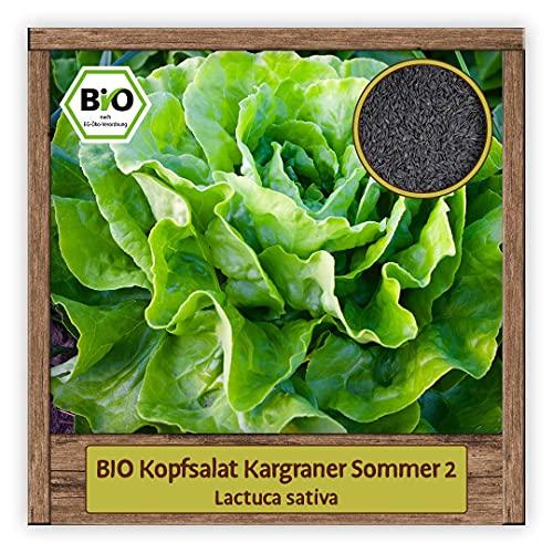 BIO Kopfsalat Samen grüner Salat Kargraner Sommer 2 Gemüse-Samen Saatgut