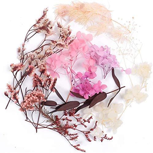 XHXSTORE Flores Secas Naturales, Caja de Flores Secas Manualidades con Gypsophila Paniculata Hortensia y Hojas de Eucalipto Kit Flor Prensada Seca para Accesorios de Resina Tocado Cuadros Marco