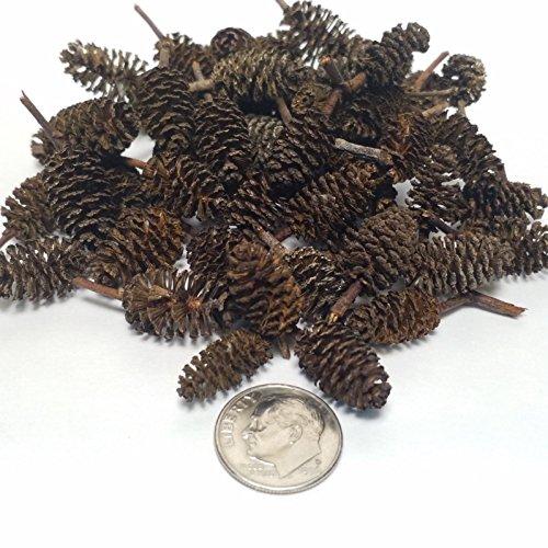 Aquatic Foods Inc. Shrimp Stuff Alder Cones, 100 Cones & 25 Tourmaline & Maifanitum Mineral Supplement for Balls Freshwater Dwarf Shrimp