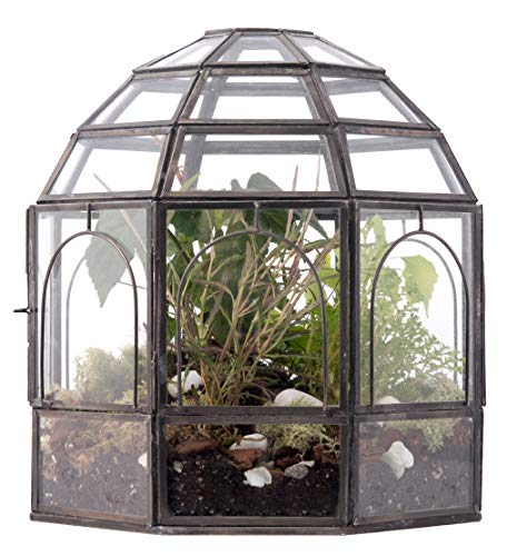 Urban Born Glass Terrarium, Birdcage - 9'x9'x10' (Urban Black Steel, Large)