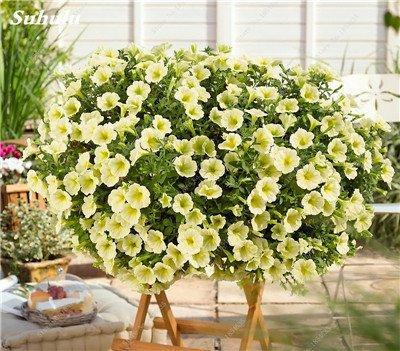 50 Pcs Pétunia Graines de fleurs pétunias Jardin Bonsai Balcon Petunia hybrida Flower Seed Plantes décoratives pour jardin 22