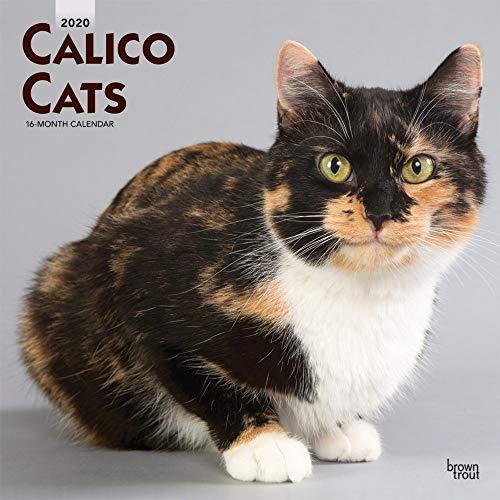 Calico Cats - Schildpatt Katzen 2020 - 16-Monatskalender: Original BrownTrout-Kalender [Mehrsprachig] [Kalender] (Wall-Kalender)