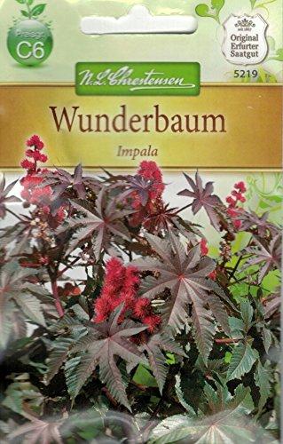 Chrestensen Wunderbaum 'Impala'