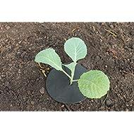 Gardening-Naturally Cabbage Collars Deters Root Flies & Repels Slugs Snails Weeds - 12.5 cm (5